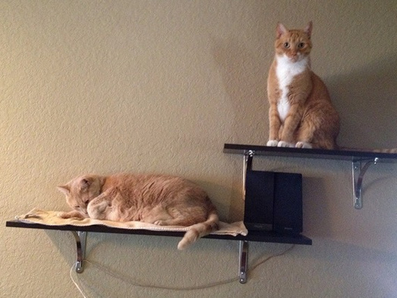 cats-on-shelves